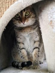 Stiina (Moeris's motther, 3 years)