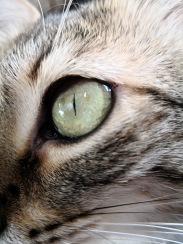 Stiina's green eye