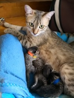 Moeris and her kittens